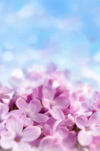 8x8FT-céu-azul-rosa-flores-Floral-feito-sob-encomenda-recém-nascido-fotografia-fundos-de-estúdio-Backdrops