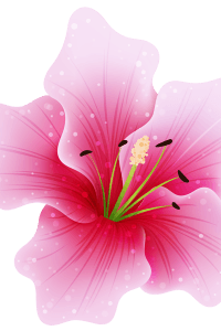 Large_Pink_Flower_PNG_Clipart