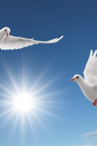 White Dove Wallpapers (2)