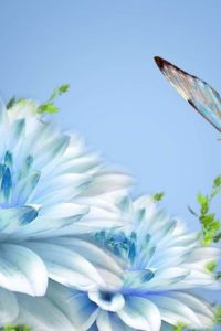 blueandwhiteflowerwallpaper-leephd-blue-and-white-flower-wallpaper-2
