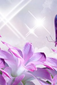 devine-pink-butterfly-lavender-sparkles-flowers-wallpapers-1366x768