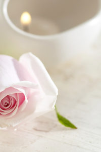 Laptops Wallpapers of White Roses Flowers Widescreen in HD