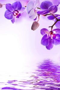 purple_orchid_flowers_reflection_water_hd-wallpaper-1727471